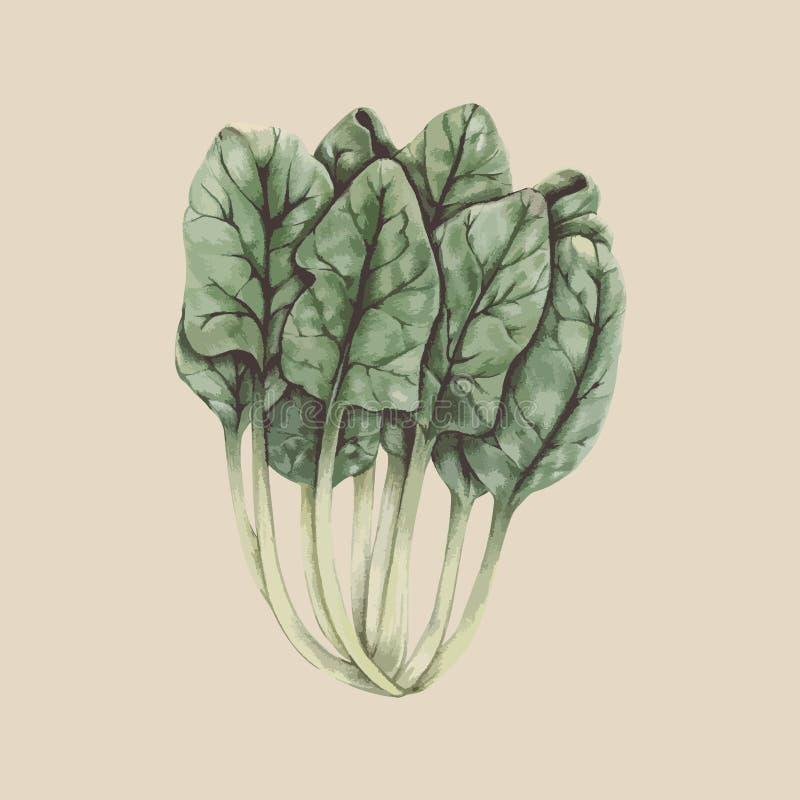 Illustrationteckning av den Choy summagrönsaken royaltyfri illustrationer