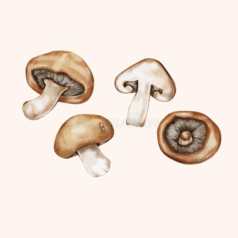 Illustrationteckning av isolerade champinjoner royaltyfri illustrationer