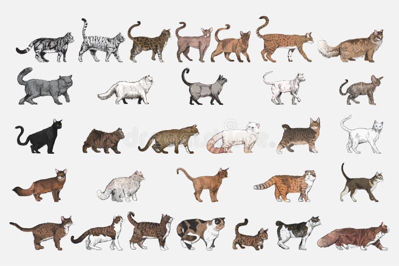Illustrationteckningsstil av katten föder upp samlingen royaltyfri illustrationer