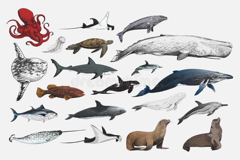 Illustrationteckningsstil av samlingen för marin- liv stock illustrationer