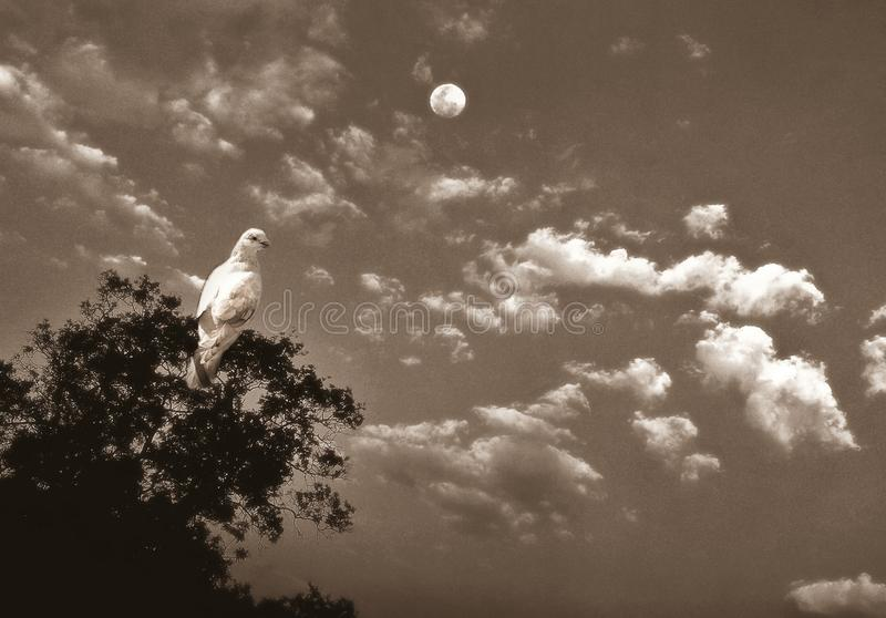 An illustrative image of pigeon on a tree branch with moon in the sky stock photography