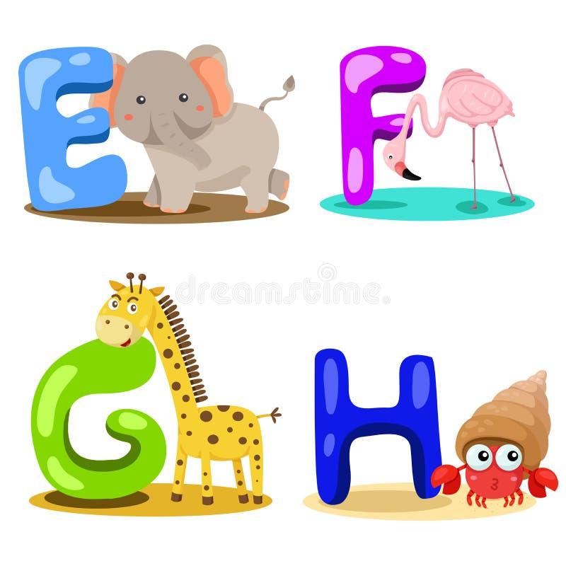 Illustrator alphabet animal LETTER - e,f,g,h. Cute and education royalty free illustration