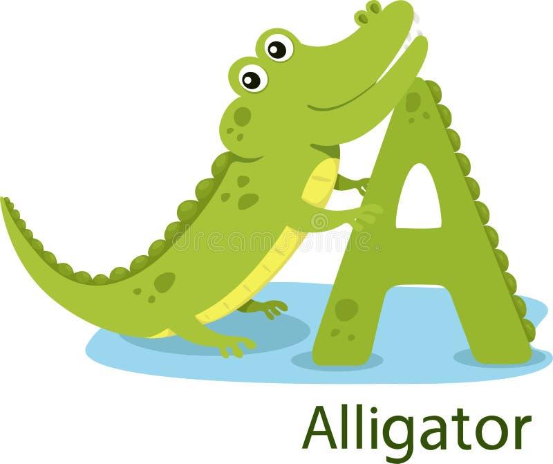 Illustrator de A con el cocodrilo libre illustration