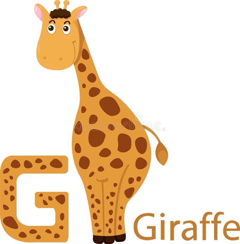 Illustrator de G con la jirafa libre illustration