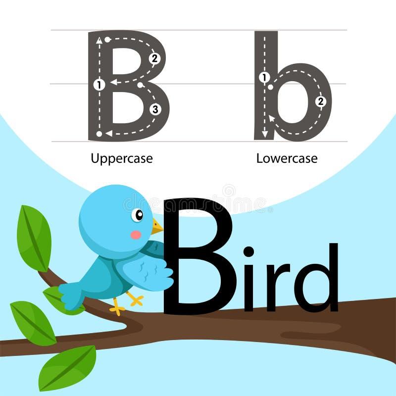 Illustrator del pájaro con una fuente ilustración del vector