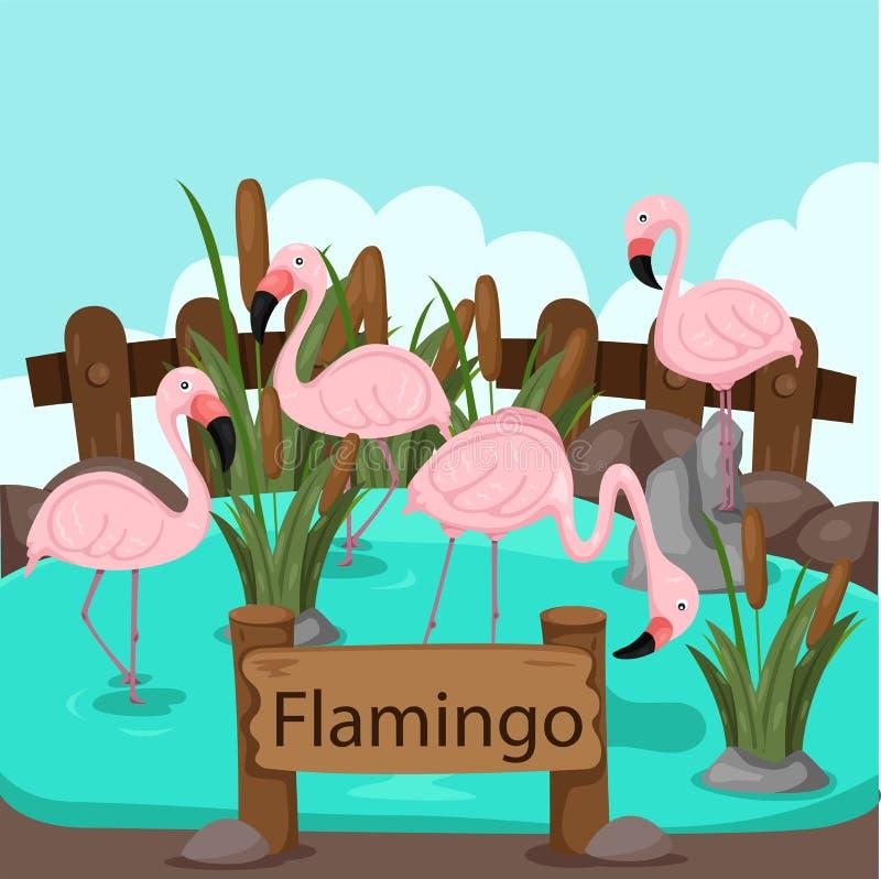 Illustrator des Flamingos im Zoo vektor abbildung