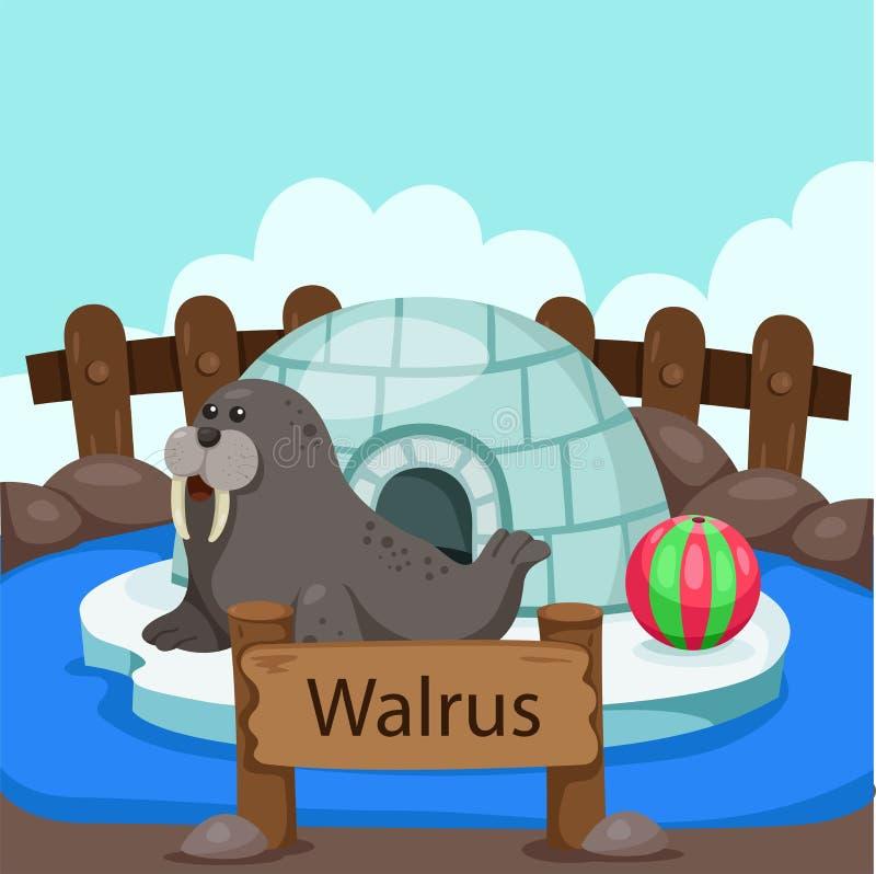 Illustrator des Walrosss im Zoo vektor abbildung