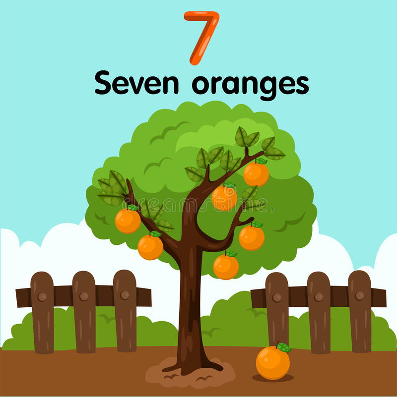 Illustrator of number seven oranges. Cute and education stock illustration