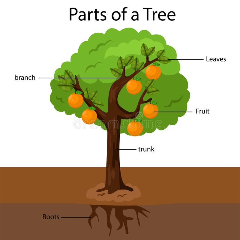illustrator parts of a tree stock vector