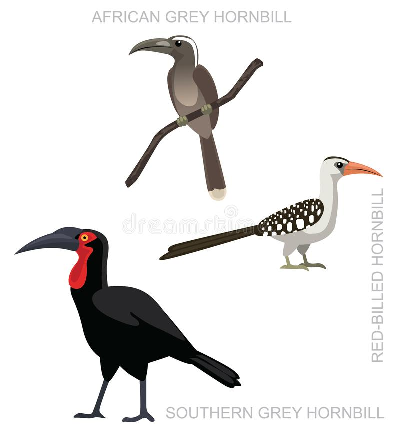 Illustrazione al suolo africana di vettore del fumetto dell'insieme del bucero dell'uccello illustrazione di stock