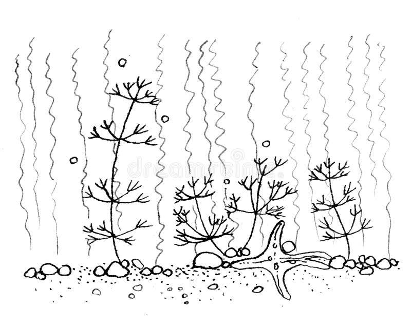 Illustrazione al tratto di scarabocchio dell'inchiostro di china di un fondo dell'acquario del mare subacqueo con le piante di ma immagini stock