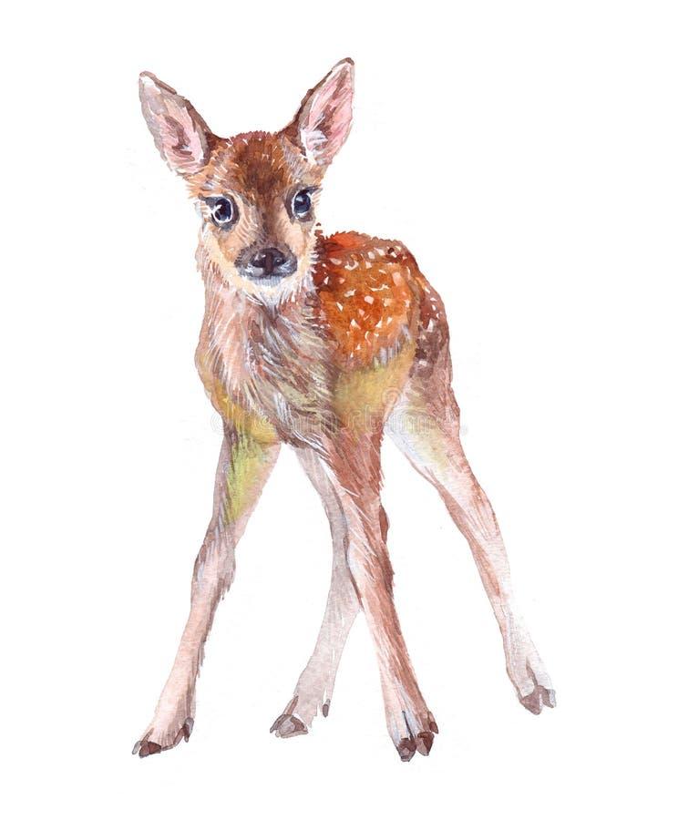 Illustrazione animale della foresta del fawn del bambino dei cervi dell'acquerello isolata su fondo bianco illustrazione di stock
