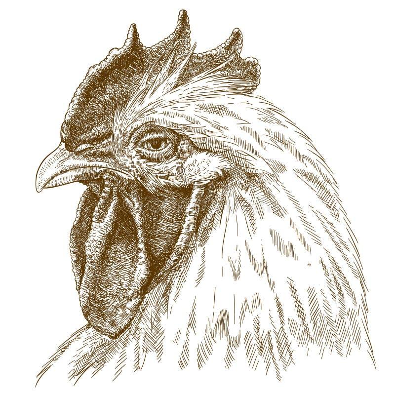 Illustrazione antica dell'incisione della testa del gallo illustrazione vettoriale