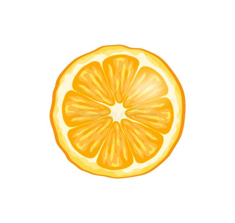 Illustrazione arancio di vettore del primo piano della fetta della frutta royalty illustrazione gratis
