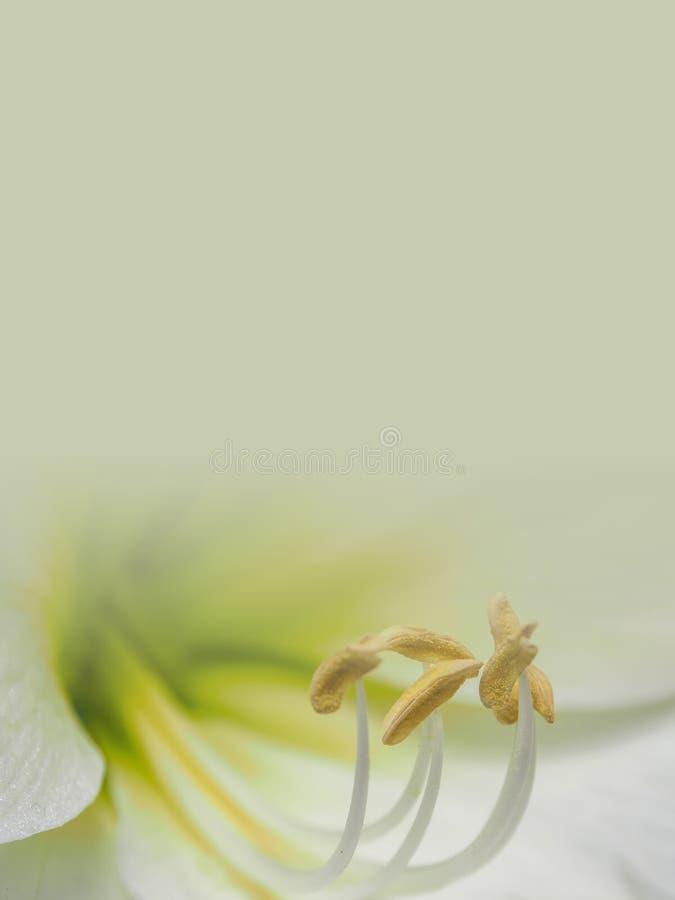 Illustrazione astratta del fondo del fiore illustrazione di stock
