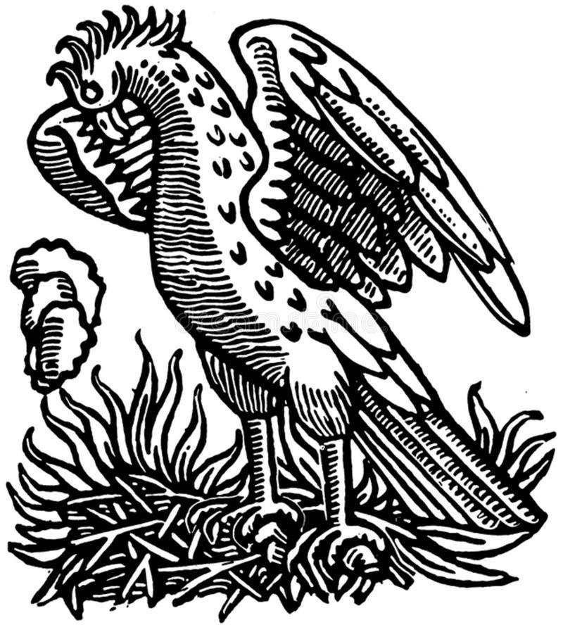 Illustrazione in bianco e nero dell'uccello fotografia stock