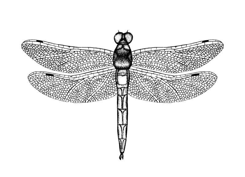 Illustrazione in bianco e nero di vettore di una libellula illustrazione vettoriale