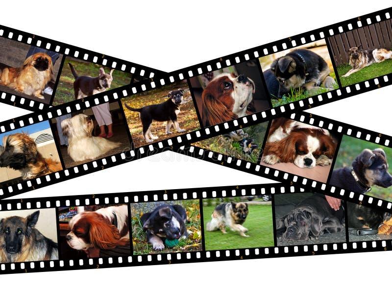 Illustrazione canina del filmstrip immagine stock