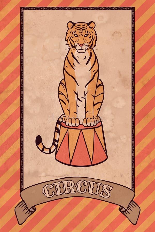 Illustrazione d'annata del circo, tigre illustrazione di stock