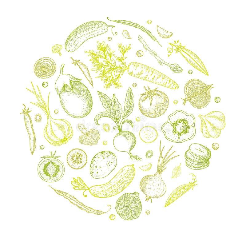 Illustrazione d'annata disegnata a mano di verdure di vettore Insieme del vegetariano dei prodotti biologici Può essere usato per illustrazione vettoriale