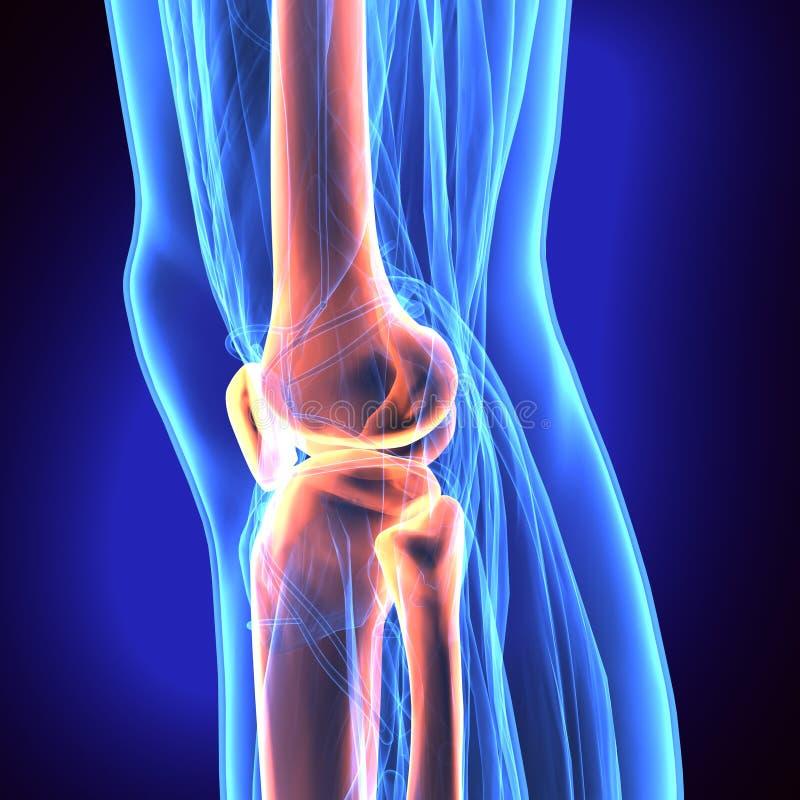 illustrazione 3D della patella - parte dello scheletro umano royalty illustrazione gratis