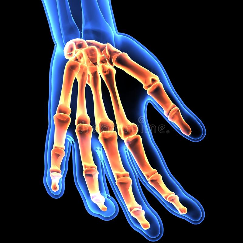 illustrazione 3D dello scheletro della mano - parte dello scheletro umano royalty illustrazione gratis