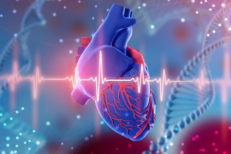illustrazione 3d di cuore e del cardiogramma umani su fondo blu futuristico Tecnologie digitali nella medicina royalty illustrazione gratis