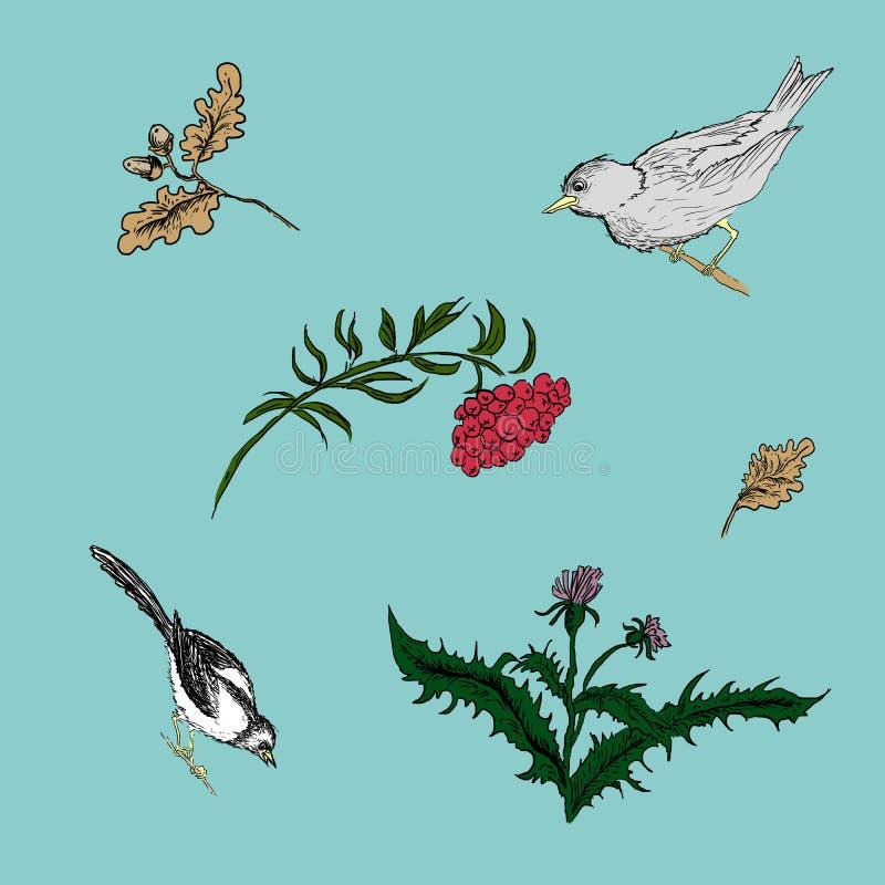 Illustrazione degli uccelli e delle piante fotografia stock