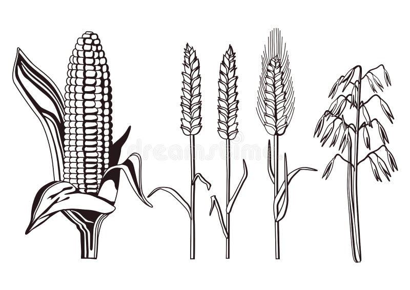 Illustrazione Dei Cereali Immagine Stock