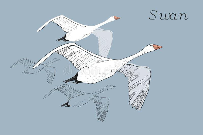 Illustrazione dei cigni di volo del disegno Disegnato a mano, progettazione grafica di scarabocchio con gli uccelli Oggetto isola illustrazione di stock