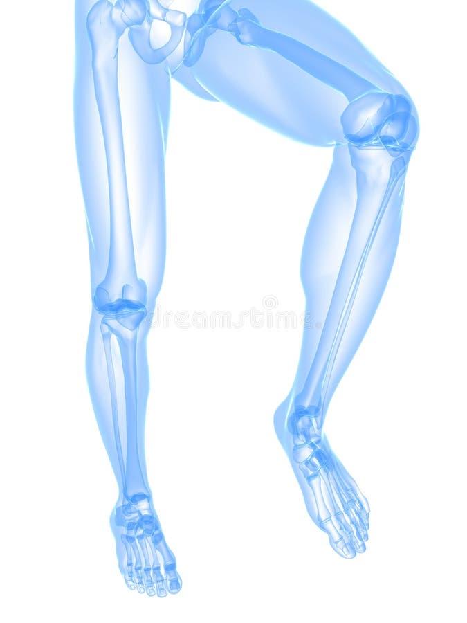 Illustrazione dei raggi X del piedino illustrazione di stock