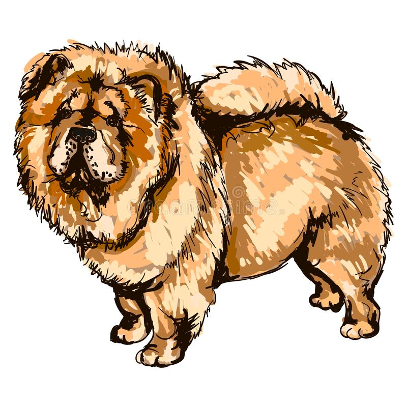 Illustrazione del chow-chow della razza del cane illustrazione vettoriale