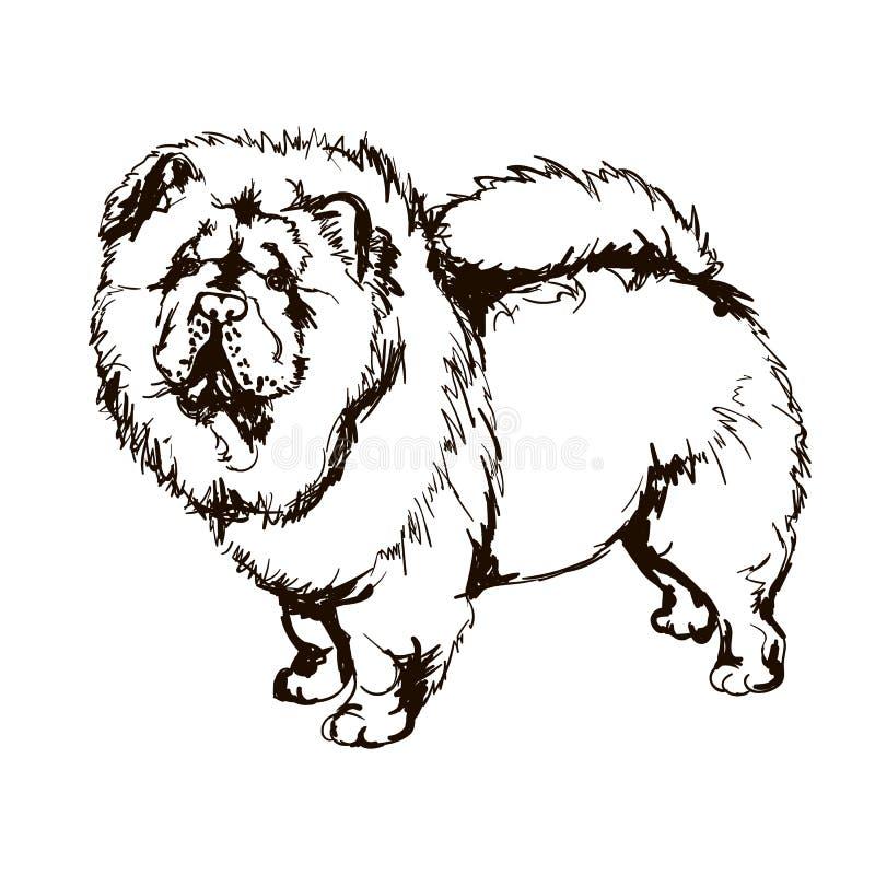 Illustrazione del chow-chow della razza del cane illustrazione di stock