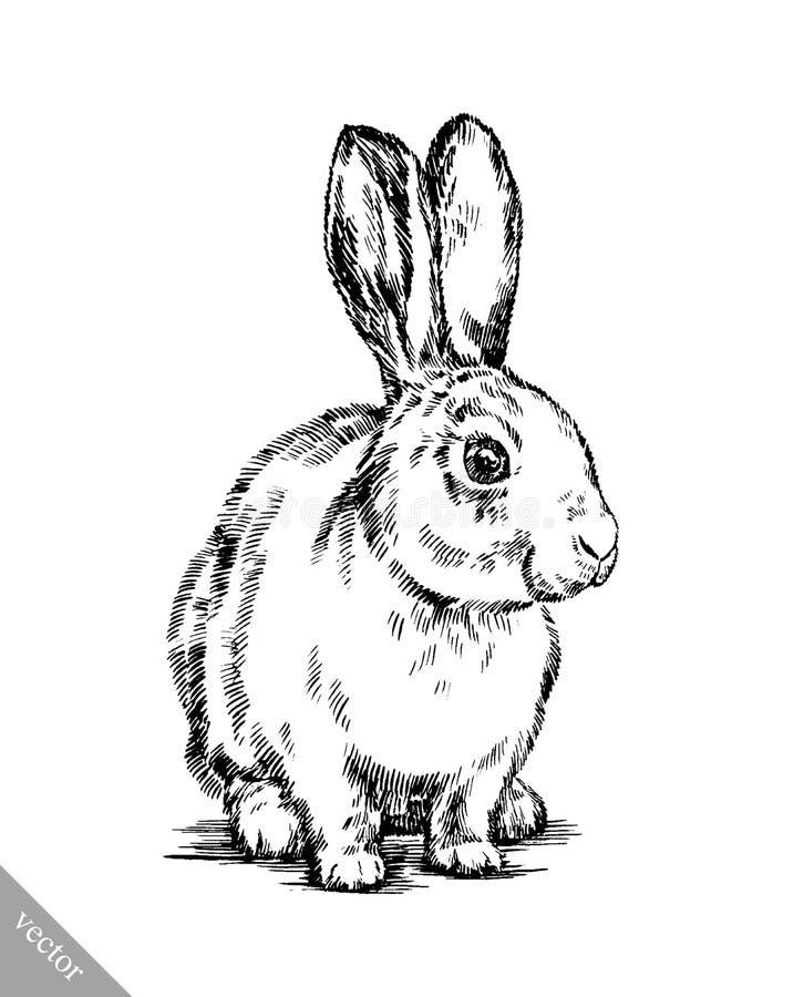 Illustrazione del coniglio isolata tiraggio dell'inchiostro della pittura della spazzola illustrazione di stock