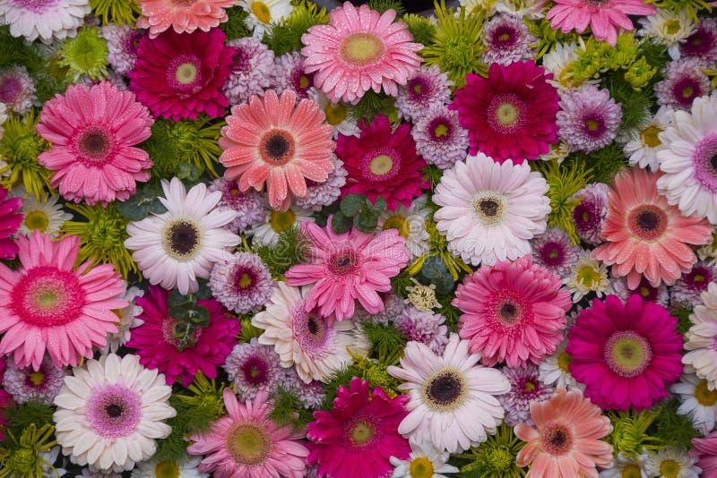 Illustrazione del fiore textures immagine stock