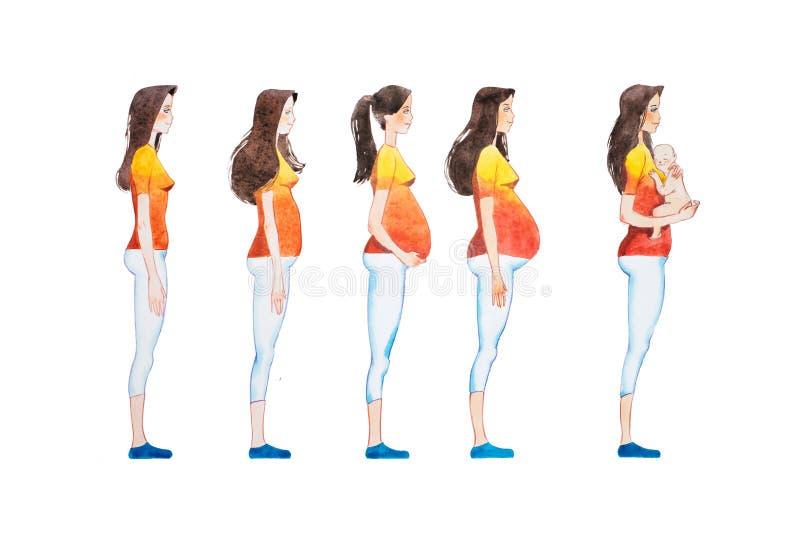 Illustrazione del fumetto delle fasi di gravidanza L'immagine di vista laterale della rappresentazione della donna incinta cambia illustrazione vettoriale