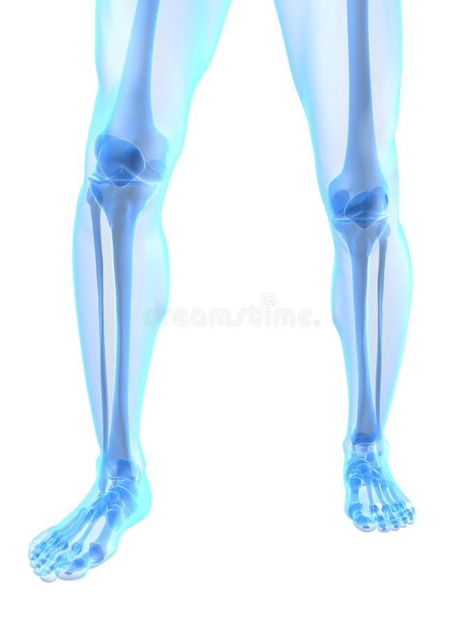 Illustrazione del ginocchio royalty illustrazione gratis