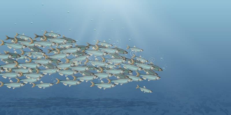 Illustrazione del paesaggio del mare, scuola di vettore del pesce Abbondanza dell'aringa o del merluzzo che si muove nel mare Fum illustrazione di stock
