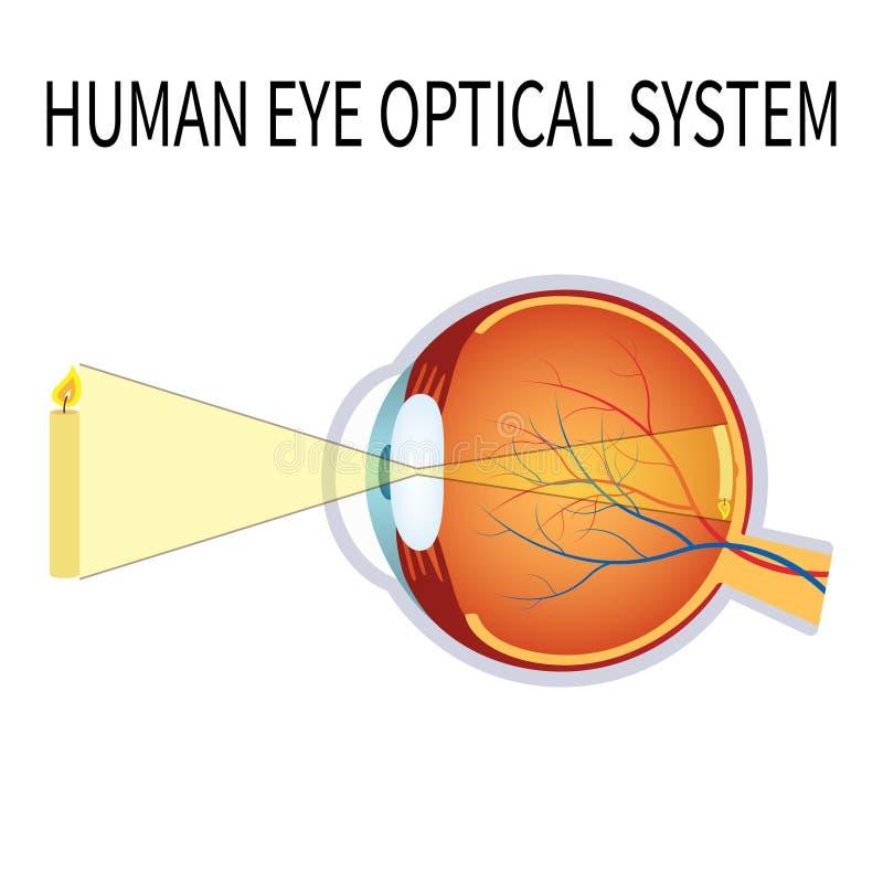 Illustrazione del sistema ottico dell'occhio umano royalty illustrazione gratis