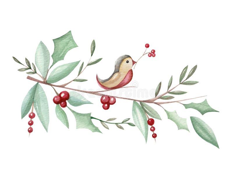 Illustrazione dell'acquerello con l'agrifoglio del ramo di Natale illustrazione vettoriale