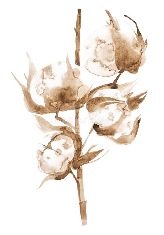Illustrazione dell'acquerello dei rami del cotone con i fiori lanuginosi Isolato su priorit? bassa bianca immagini stock libere da diritti