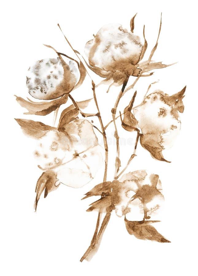 Illustrazione dell'acquerello dei rami del cotone con i fiori lanuginosi Isolato su priorit? bassa bianca fotografia stock