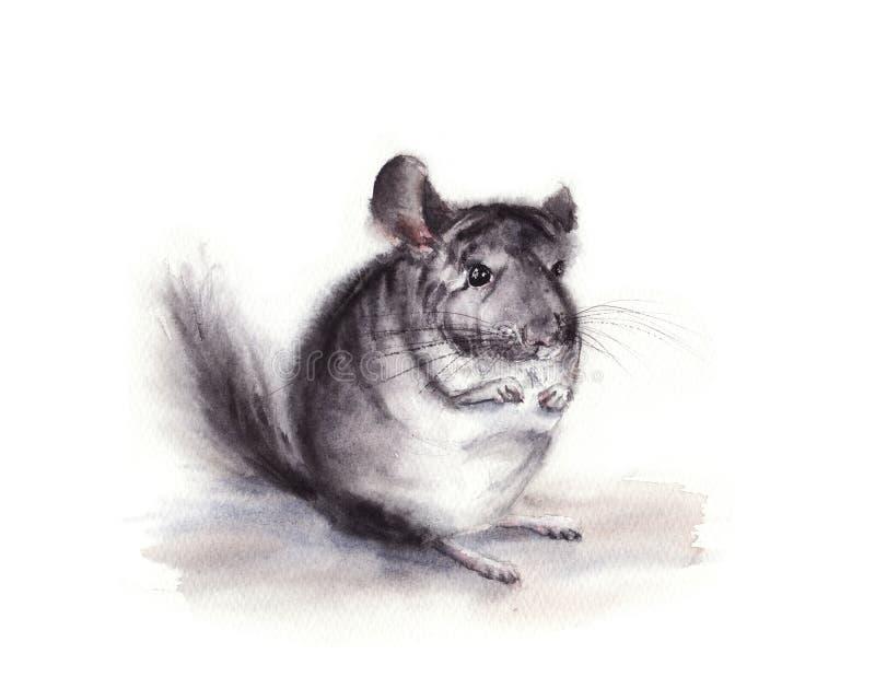 illustrazione dell'acquerello del cincillà lanuginoso grigio isolato su fondo bianco royalty illustrazione gratis