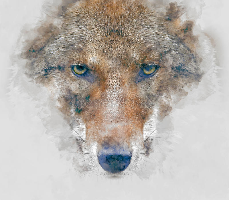 Illustrazione dell'acquerello del lupo fotografia stock libera da diritti