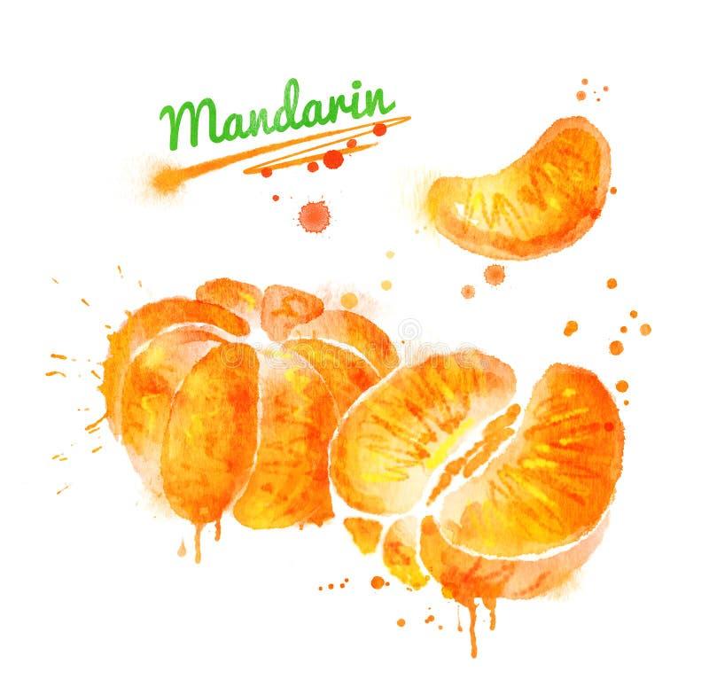 Illustrazione dell'acquerello del mandarino sbucciato illustrazione di stock
