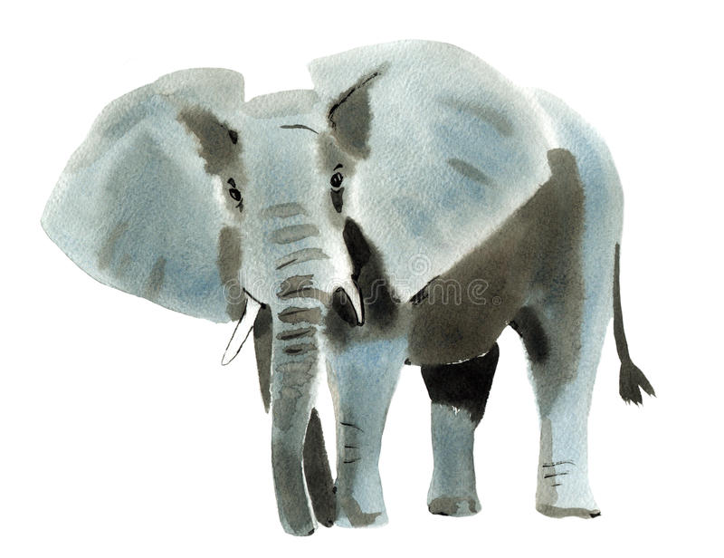 Illustrazione dell'acquerello dell'elefante nel fondo bianco illustrazione di stock