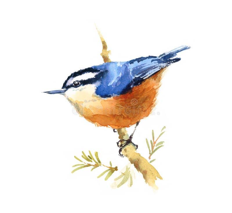 Illustrazione dell'acquerello dell'uccello della sitta disegnata a mano royalty illustrazione gratis