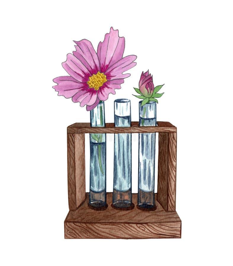 Illustrazione dell'acquerello dello scaffale del tubo con il singolo fiore rosa Wildflower della primavera royalty illustrazione gratis