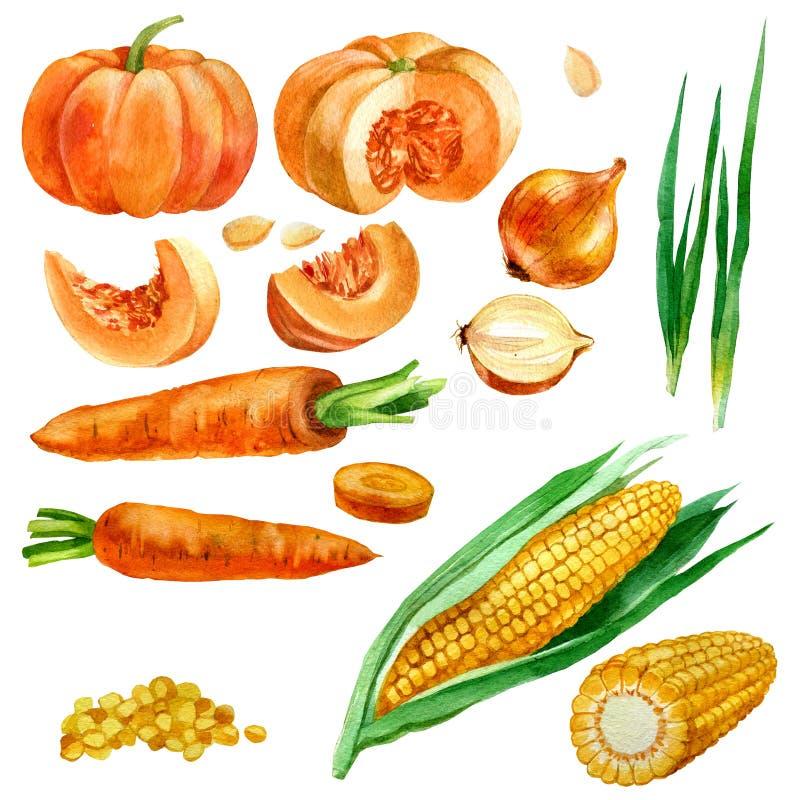 Illustrazione dell'acquerello, insieme, immagini delle verdure, cereale e noccioli di cereale, carote, zucche e cipolle royalty illustrazione gratis