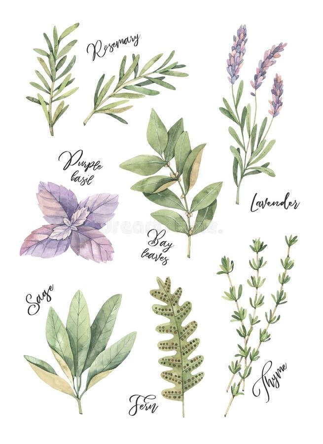 Illustrazione dell'acquerello Manifesto con le foglie verdi botaniche, lei royalty illustrazione gratis